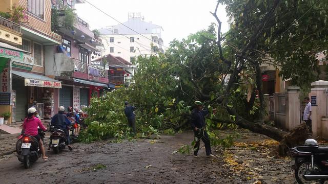 Một cây bằng lăng bật gốc chắn ngang đường Chu Văn An khiến gia thông qua đoạn đường này bị ách tắc…