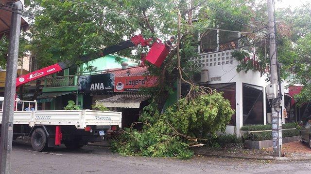 Trong sáng 13/9 nhân viên của Trung tâm công viên cây xanh Huế đã tiến hành cưa cắt, dọn dẹp để đảm bảo an toàn cho người đi đường… Ảnh:Lê Chung