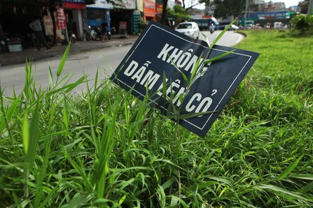 Những biển cảnh báo đã nằm trong đám cỏ mọc tự nhiên trên dải phân cách đường Hoàng Quốc Việt.