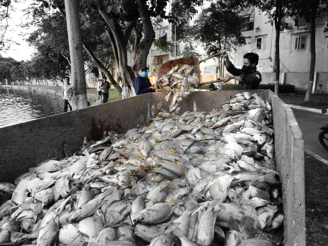 Trong lúc đó, ông Phan Quang Khường đề nghị sớm có biện pháp nạo vét bùn dưới hồ để khỏi ô nhiễm...Ảnh: Đức Hoàng