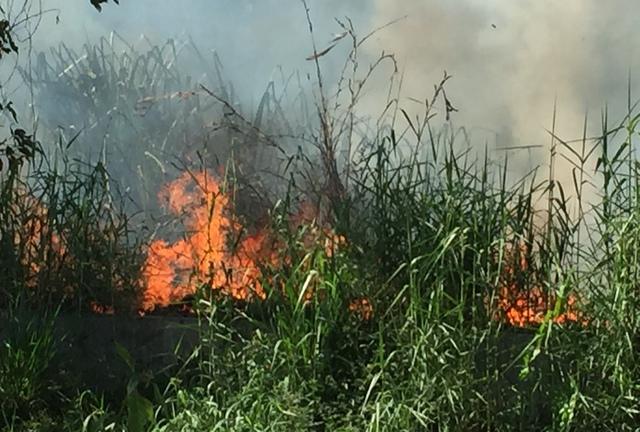 Khói lửa bao trùm phả sức nóng cùng tàn tro bay mù mịt do đám cháy đồng cỏ giữa KDC...