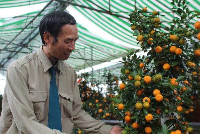 Ông Bùi Thế Mạnh, cụm 3, phường Tứ Liên là một trong những người có kinh nghiệm lâu năm nhất trong nghề trồng quất cảnh mini.