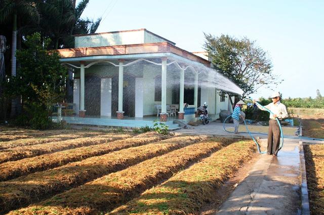 Nông dân Lê Văn Sơn ở ấp Láng, xã Tân Thành, một trong những hộ gia đình hiếm hoi còn nước tưới nhờ ao trữ nước sau vườn. Chỉ dám trồng ngò rí chớ không dám trồng gì khác đâu, làm gì nhiều nước mà tưới - ông Sơn cho hay. Ngò rí chỉ 30 ngày là thu hoạch.