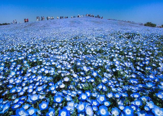 Thiên đường xanh - Nhật Bản.