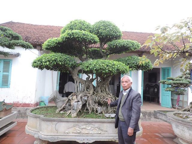 Cây Xanh dáng Song long thập tử, một trong những cây được ông Ngọ coi là bảo bối.
