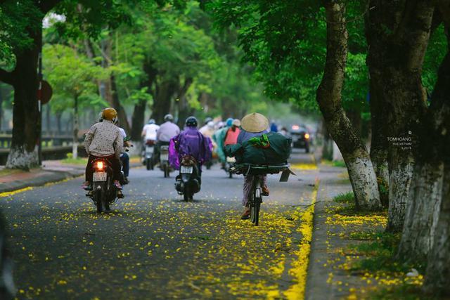 Cơn mưa chiều vội vã vô tình làm cánh phượng vàng rơi rụng đầy trên những con đường, ngõ phố của Huế. Ảnh: Tom Hoang