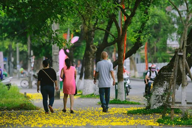 Lặng ngắm những cánh hoa phượng rơi ngập trên những con đường khiến nhiều người bỗng nhiên trầm lắng trong những cảm xúc, suy tư. Ảnh: Tom Hoàng
