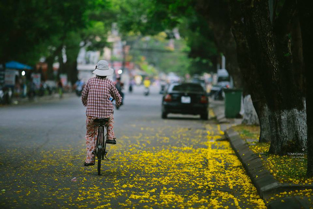 Một con đường vàng rực hoa phượng rơi...Ảnh: Tom Hoàng