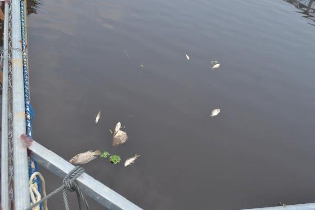 Lồng nuôi cá của gia đình ông Thành có khoảng 1,5 tấn cá đã chết trong 2 ngày 17 và 18.