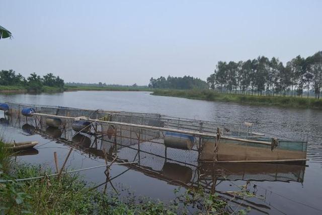 Cá chết bất thường thời gian qua được xác định do nước sông Bùng ô nhiễm