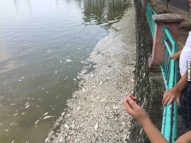 Chính phủ chỉ đạo Hà Nội và các Bộ phải tìm được nguyên nhân gây cá chết ở Hồ Tây. Ảnh TL