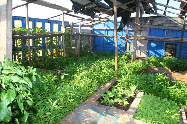 Vườn rau xanh mướt trên đảo Phan Vinh B và đảo Phan Vinh A.