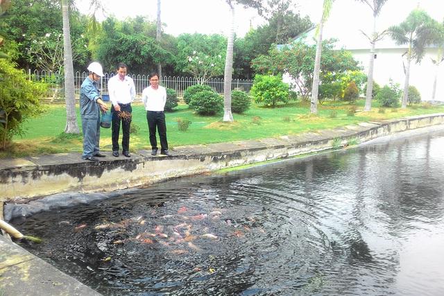 Những chú chép, diêu hồng bơi dưới bể là bằng chứng chân thực nhất về hiệu quả của công nghệ và quy trình xử lý nước thải y tế tại Bệnh viện Đa khoa tỉnh Long An. Ảnh: Đỗ Bá