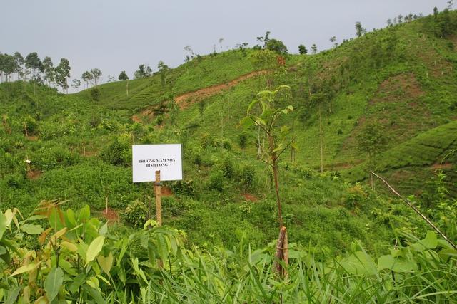 Một cây non được các em học sinh Trường mầm non Bình Long trồng trong khu rừng đã bị chặt phá trơ trọi.
