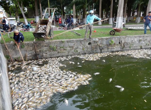 Cá chết nổi trắng hồ Công viên 29-3 ngay giữa trung tâm Đà Nẵng.