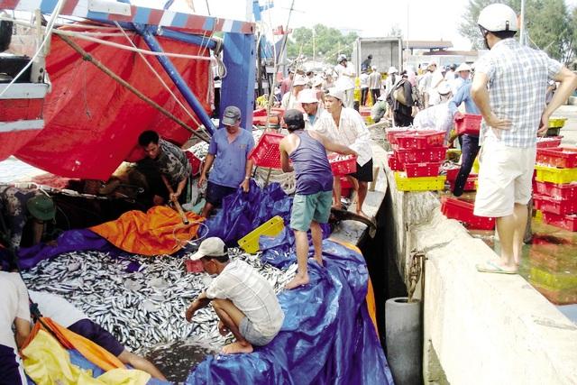 Bộ NN&PTNT cho biết đã tổ chức giám sát tại các cảng cá, bến cá khi tàu về bờ... Ảnh: TL