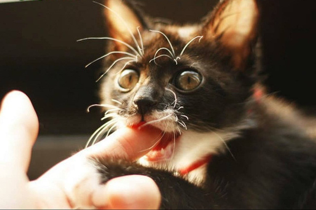 Những gia đình nuôi chó, mèo cần phải tiêm phòng bệnh dại cho chúng và xích, nhốt cẩn thận, không để trẻ nhỏ lại gần. Ảnh: TL