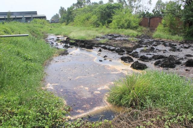 Nguồn nước thải xả ra từ Công ty Quang Minh. Ảnh: Q.Duy