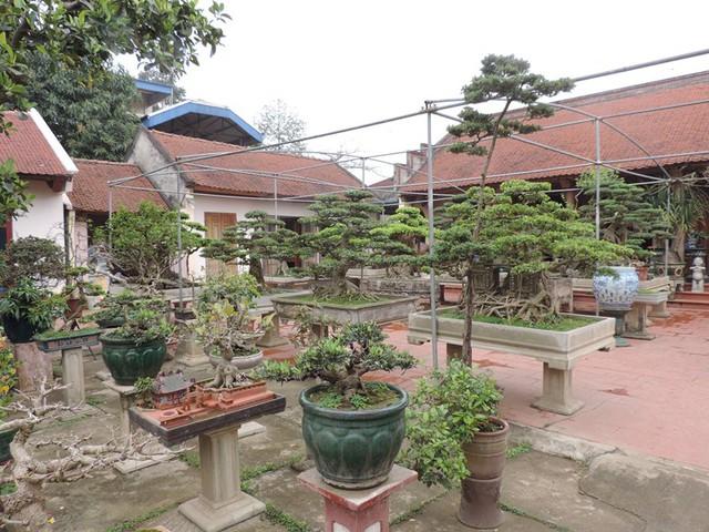 Một góc vườn cây cảnh.