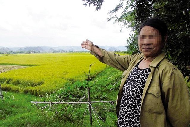 Cánh đồng ở xã Quảng Trường, nơi xảy ra vụ việc côn đồ đến đòi tiền bảo kê, hành hung thợ gặt. Ảnh: M.Khang