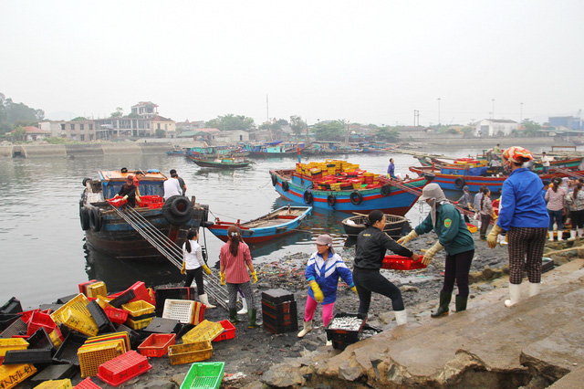 Hàng trăm tàu thuyền của ngư dân Cửa Lò vẫn ngày đêm ra biển.