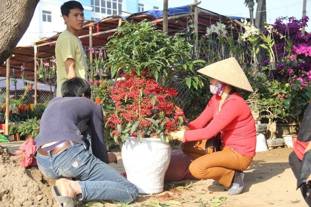 các chủ sạp hoa đang tích cực cắt tỉa, sửa sang lại các chậu hoa cho ưng ý