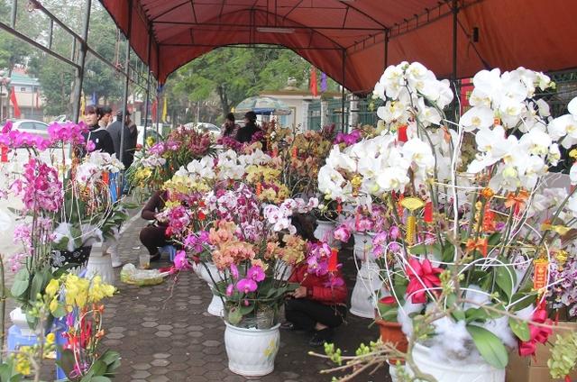 Các loài hoa lan cũng rất được ưa chuộng trong dịp Tết