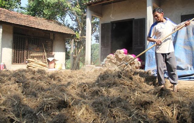 Sau khi thu hoạch, rễ cây hương được phơi khô rồi giã thành bột để làm nguyên liệu chính cho cây hương