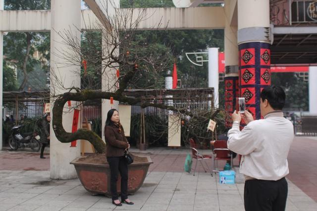 Nhiều người chụp ảnh kỉ niệm với cây đào quý. Ảnh: Đình Việt.