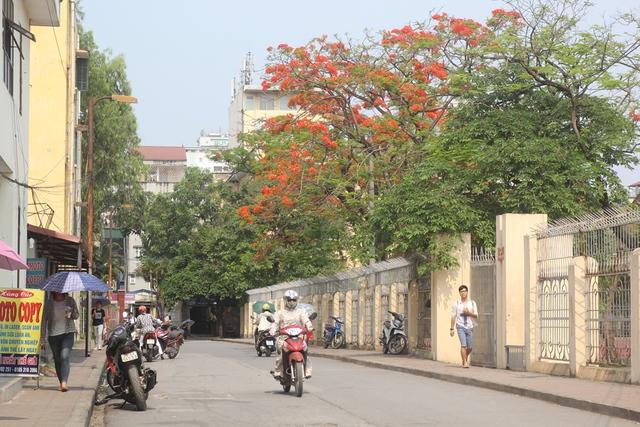 Những ngày này, khi cái nắng gắt mùa hè trải vàng trên khắp các tuyến phố của Thủ đô cũng là thời điểm hoa phượng vĩ bừng sắc thắm.