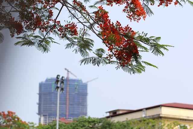 Một góc trời Thủ đô ngập tràn sắc đỏ.