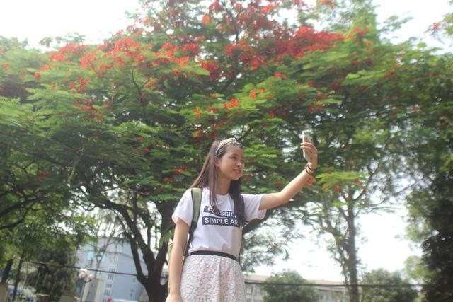 Nhiều bạn trẻ ghi lại những khoảnh khắc đẹp với hoa phượng.