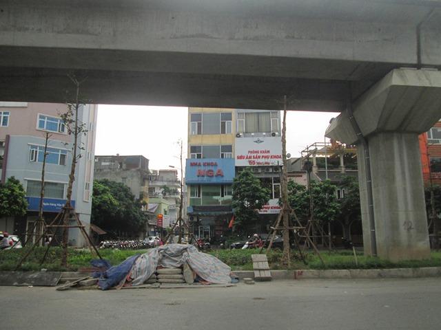 Nhiều người băn khoăn cây phát triển sẽ cao hơn cầu, ảnh hưởng đến giao thông. Ảnh: Ngọc Thi