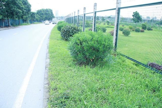 Với mức chi phí như vậy, tính ra mỗi một mét cỏ trên tuyến đường này chi phí cắt tỉa sẽ tốn hơn 2 triệu đồng.