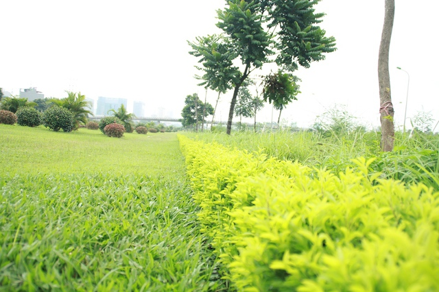 """Ông Nguyễn Đức Chung cho biết, khoảng 3 năm trở lại đây, thành phố đã thực hiện chính sách xã hội hóa trồng việc trồng cây xanh. Tuy nhiên, bản chất của việc xã hội hóa không phải là tiền của tư nhân bỏ ra, mà vẫn lấy tiền từ ngân sách thành phố để đặt hàng các doanh nghiệp trồng cây xanh. Theo Chủ tịch Hà Nội, chính việc """"đặt hàng"""" đó khiến nhiều công ty lao vào trồng cây xanh nên không kiểm soát được chất lượng. Vì vậy mới dẫn đến tình trạng cây xanh bật gốc."""