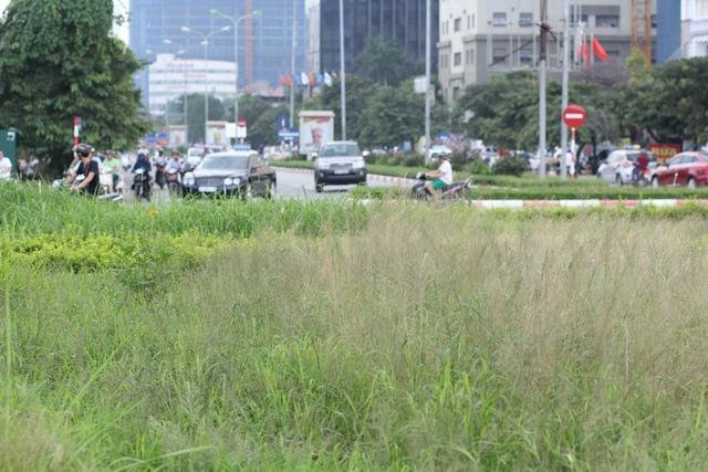 Nhiều đoạn đường cỏ mọc cao gần bằng đầu người.