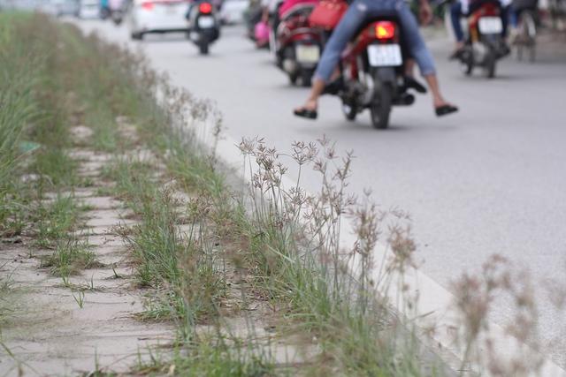 Hà Nội đang vào mùa mưa, thời tiết ẩm ướt nên cỏ cây mọc nhanh hơn bình thường.