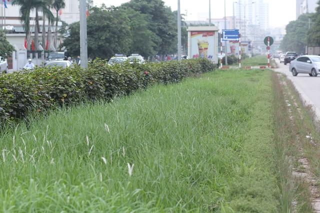 Theo ghi nhận, nhiều đoạn đường cỏ mọc um tùm nhưng không thấy bóng dáng công nhân nào chăm sóc.