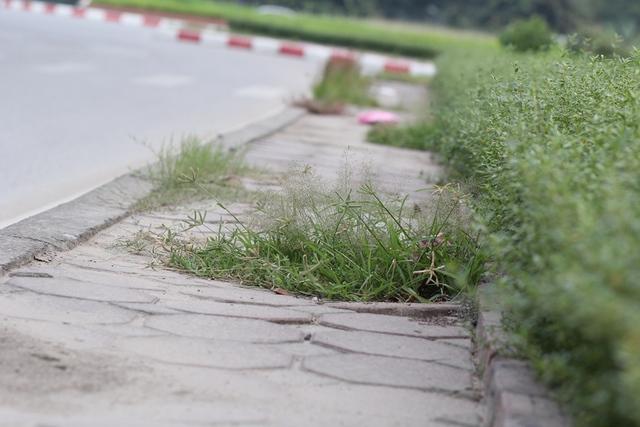 Các loại cỏ cây thi nhau mọc lên sát lề đường.
