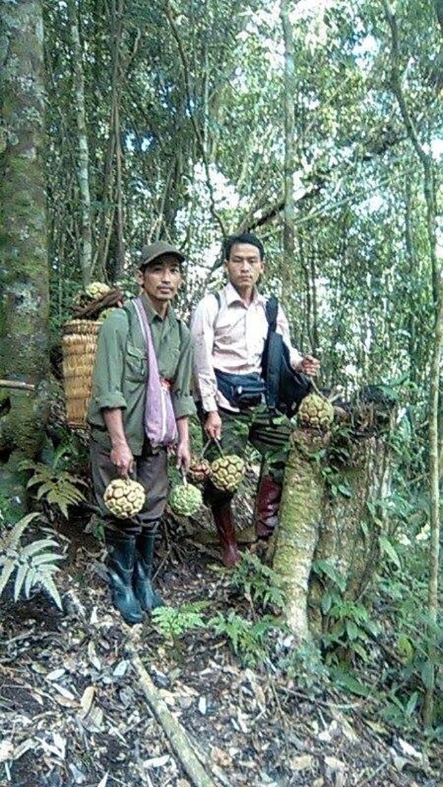 Người dân Sơn La đi hái Na rừng (Ảnh internet)