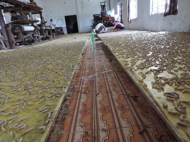 Xưởng nuôi tằm tự dệt của bà Thuận tại xã Phùng Xá