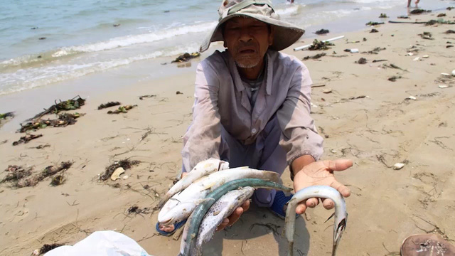 Nhiều ý kiến trái chiều quanh đề xuất tổ chức tour du lịch Formosa sau sự cố môi trường biển khiến cá chết hàng loạt ở 4 tỉnh miền Trung. Ảnh VNE