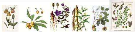 Phương thuốc cổ truyền trừ ho: Với hơn 300 năm lịch sử 2