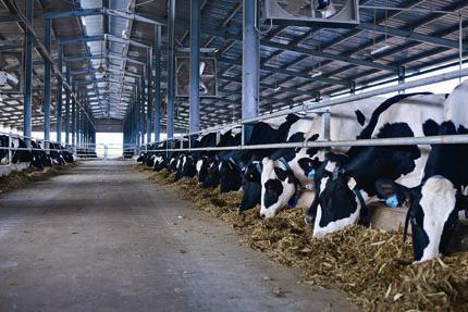 Vinamilk dành 1500 tỷ đồng thu mua sữa tươi nguyên liệu từ nông dân chăn nuôi bò sữa 4