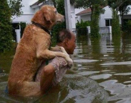 Yêu chó hơn ...vợ 2