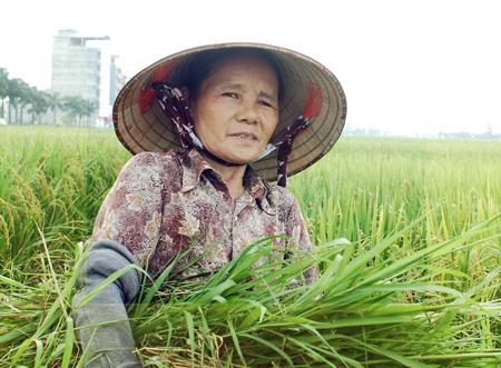 Nông dân thu nhập 4,2 triệu đồng/năm: Rất thấp! 1