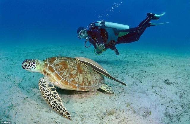Hòn đảo này là địa điểm lý tưởng dành cho các du khách yêu thích hoạt động lặn khám phá dưới biển.