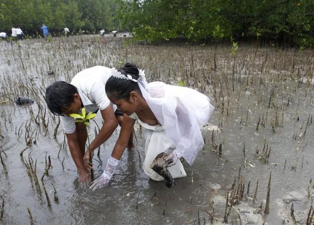 Anh Joey Bayo và vợ đang lội giữa bùn lầy để trồng cây đước sau khi vừa tổ chức lễ thành hôn ở thị trấn San Jose, thành phố Palawan, phía tây Philippines.