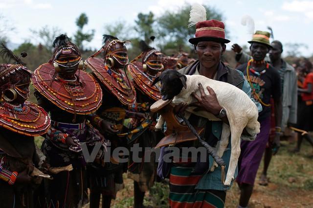 Một người đàn ông Pokot bế một con cừu đi ban phúc cho các bé gái trong lễ trưởng thành. Ảnh: Siegfried Modola/Reuters