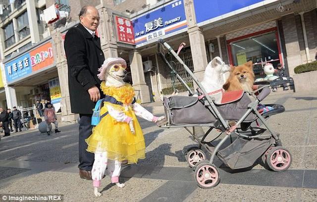 Xiaoniu đã bị người chủ cũ của nó bỏ rơi cách đây ba năm. Ông Fang đã nuôi Xiaoniu kể từ đó. Nguồn: Rex